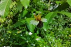 Huawei-Y7a-camera-sample-picture-by-Revu-Philippines_macro-a