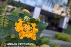 Samsung-Galaxy-A30s-sample-picture-for-comparison-review-Revu-Philippines-c