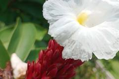 Infinix-Zero-X-Pro-camera-sample-picture-in-review-by-Revu-Philippines-white-flower-auto