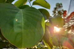 OPPO-A74-5G-camera-sample-picture-in-review-by-Revu-Philippines_1x-plant