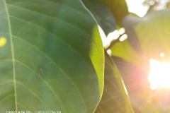 OPPO-A74-5G-camera-sample-picture-in-review-by-Revu-Philippines_2x-zoom-plant