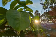 OPPO-A74-5G-camera-sample-picture-in-review-by-Revu-Philippines_Alora-ultra-wide-plant