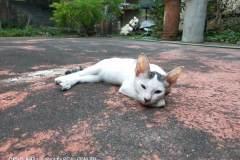 OPPO-A92-sample-picture-Revu-Philippines_auto-cat