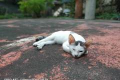 OPPO-A92-sample-picture-Revu-Philippines_portrait-cat