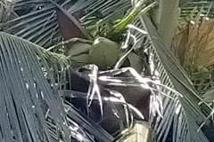 OPPO-A92-sample-picture-Revu-Philippines_10x-dazzle-color