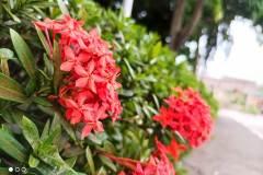 POCO-M3-Pro-5G-camera-sample-picture-in-review-by-Revu-Philippines_auto-santan-flower