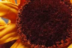 POCO-M3-Pro-5G-camera-sample-picture-in-review-by-Revu-Philippines_auto-sunflower