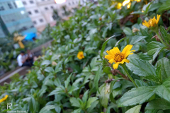 Realme-3-sample-picture-camera-review-Revu-Philippines-e