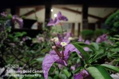 Samsung-Galaxy-A21s-camera-sample-picture-by-Revu-Philippines-g