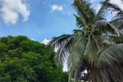 Realme-7-Pro-camera-sample-picture-Revu-Philippines_auto-8