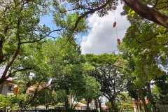 Realme-7-pro-camera-sample-picture-Revu-Philippines-a