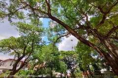 Realme-7-pro-camera-sample-picture-Revu-Philippines-b