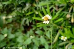 Realme-7-camera-sample-picture-Revu-Philippines_1x