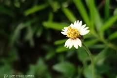 Realme-7-camera-sample-picture-Revu-Philippines_2x