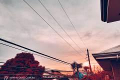Realme-7i-camera-sample-picture-Revu-Philippines_flamingo