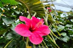 Realme-GT-Master-Edition-camera-sample-picture-i-review-by-Revu-Philippines-1x-flower