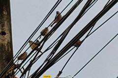 Realme-GT-Master-Edition-camera-sample-picture-i-review-by-Revu-Philippines-20x-zoom-birds