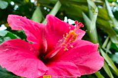 Realme-GT-Master-Edition-camera-sample-picture-i-review-by-Revu-Philippines-2x-zoom-flower
