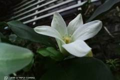 Realme-Narzo-camera-sample-picture-by-Revu-Philippines_macro