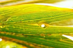 Tecno-Spark-7-Pro-camera-sample-picture-in-review-by-Revu-Philippines-droplet-with-filter-a