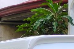 Vivo-X60-5G-camera-sample-picture-in-review-by-Revu-Philippines_street-20x-zoom