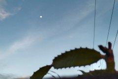Vivo-Y31-camera-sample-picture_initial-e