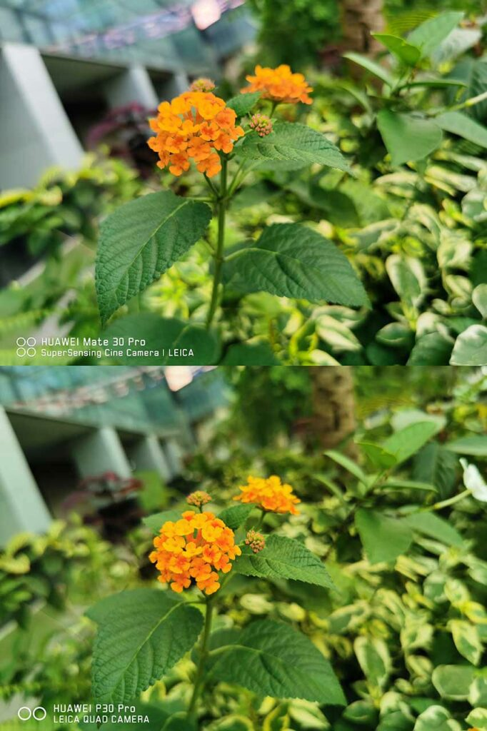 Huawei Mate 30 vs P30 Pro sample auto mode pictures shot on the 40MP main camera by Revu Philippines