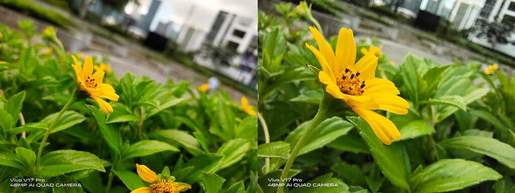 Vivo V17 Pro sample pictures: Auto mode vs Macro mode in review by Revu Philippines