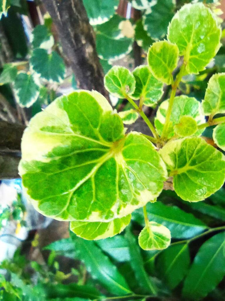 Xiaomi Redmi 9 sample picture in macro mode by Revu Philippines